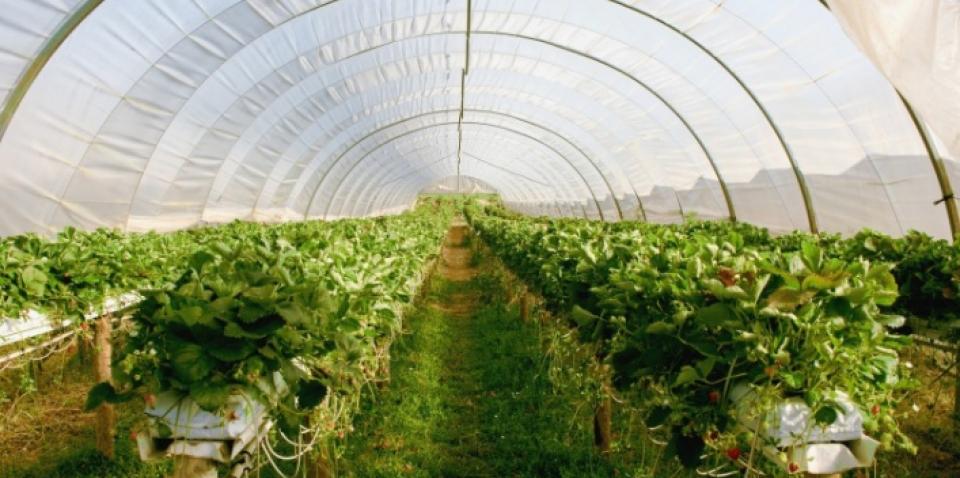 Javni poziv srednjim školama za dodjelu bespovratnih sredstava za promociju i jačanje kompetencija strukovnih zanimanja u poljoprivredi.